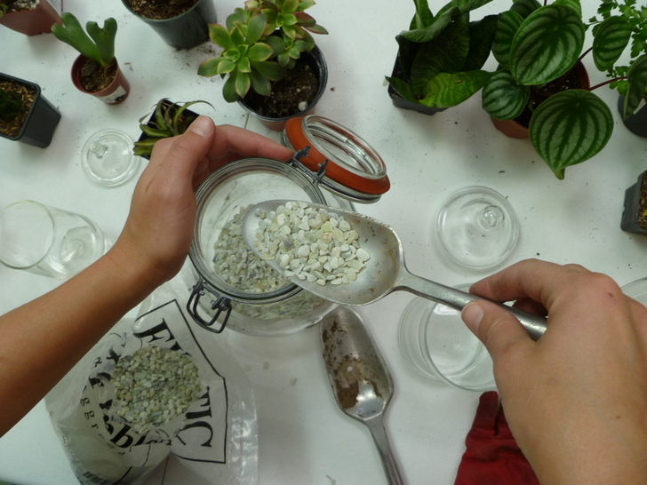 DIY-Terrariums-Bridgette-Meinhold-24